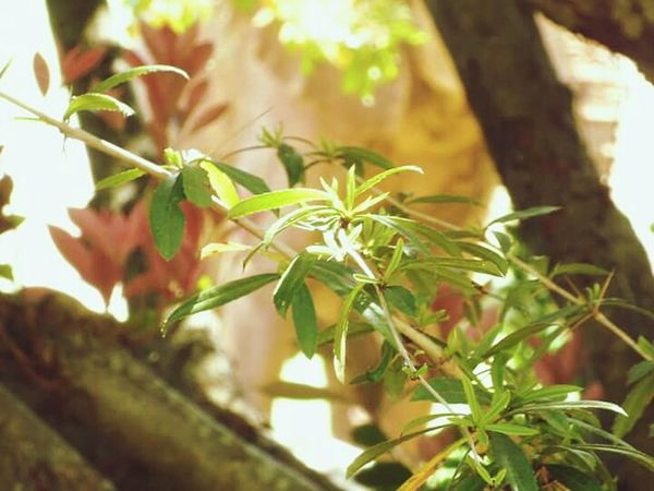 Nice plant Plant Nature Outdoors