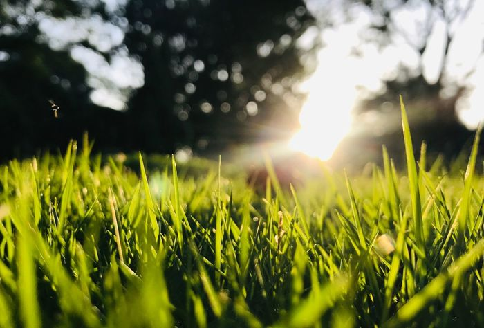 view of a little bug Low Angle View Plant Field Sky Growth Land Agriculture Beauty In Nature Sunlight Green Color Landscape Nature Lens Flare Crop  No People Sun Rural Scene Tranquility Environment Tranquil Scene Sunbeam