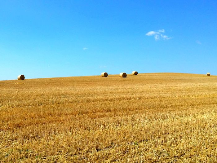 Agriculture Sky Field Rural Scene Day Cereal Plant Outdoors Nature Landscape Blue No People Clear Sky Combine Harvester Cornfield Cornfield And Sky Premium Premium Collection EyeEm Premium Collection EyeEm