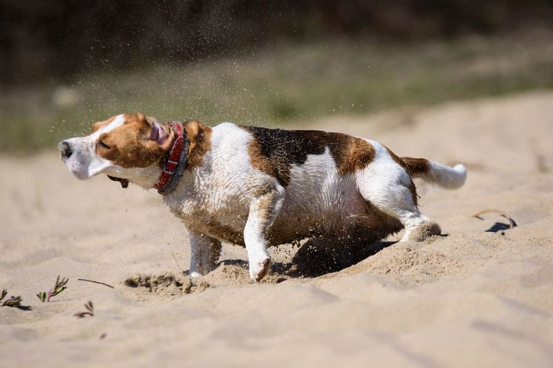 Beagle Day Dog Domestic Animals Nature One Animal Outdoors Water Wet