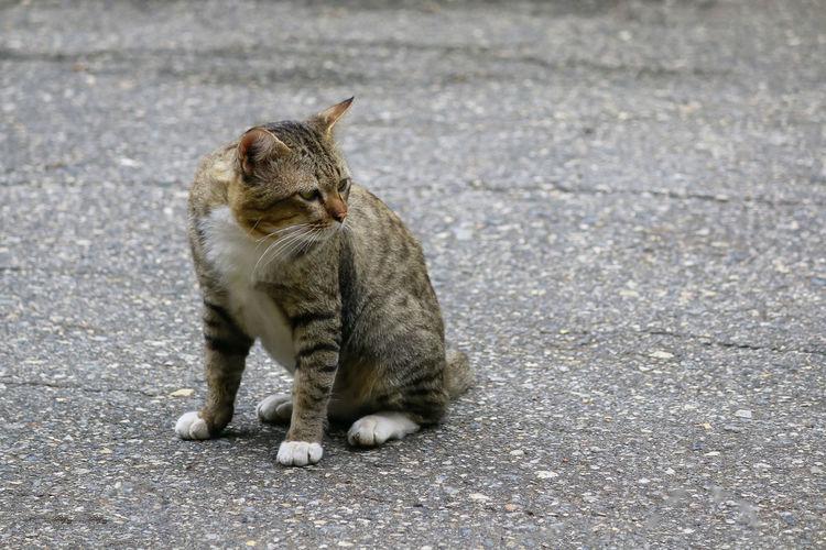 Cat sitting on road