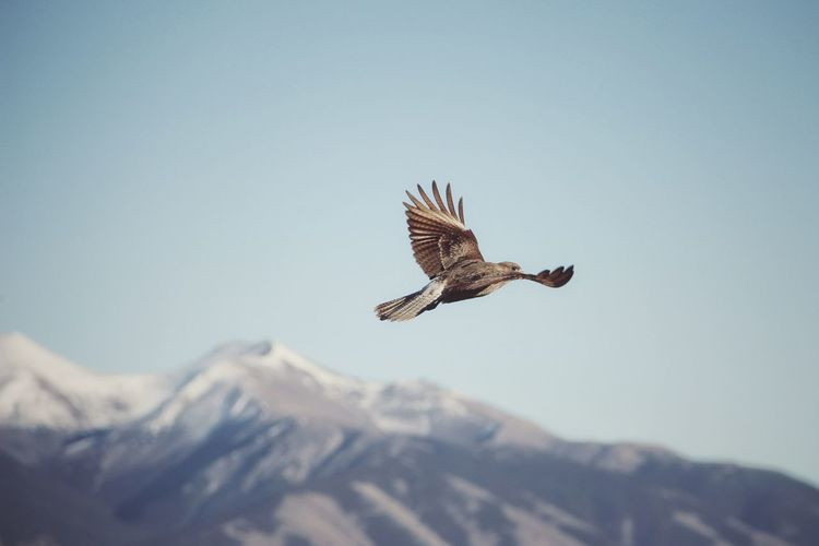 | Patagonia | Dreaming PATAGONIA Travel Nature Bird Of Prey Bird Spread Wings Flying Mountain Winter Snow Vulture Sky Animal Themes Falcon - Bird Owl Eagle - Bird Fly Stay Out My Best Photo