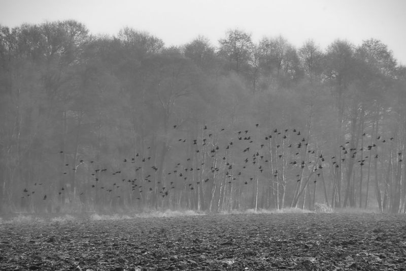 View of birds flying over trees