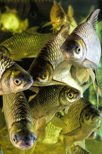 Full frame of fishes