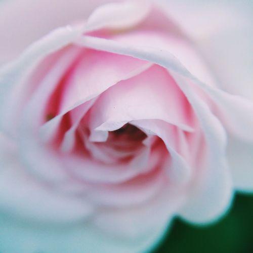 #macro #nature #deadcrap #iheartdeadcrap #flower #flora #floral Olloclip_macro Donnieart