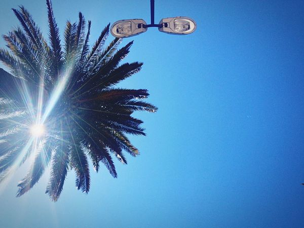 Hyères Waiting Palm Tree IPhoneography Enjoying The Sun Light Pastel Power My Favorite Photo this picture is from my home town. at train station. a place i always went with friends and girlfriends to play smoke or kiss. this day i sat and layed on a bench where i use to sit. in shadow of the palm tree or in light of traffic light. depending on the time. never took a look from this precise point of view. The City Light The City Lights
