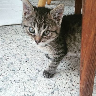 Cat Kitty Love Precious Cute Cute Cats Pets Animals Mine Love Her👌😻