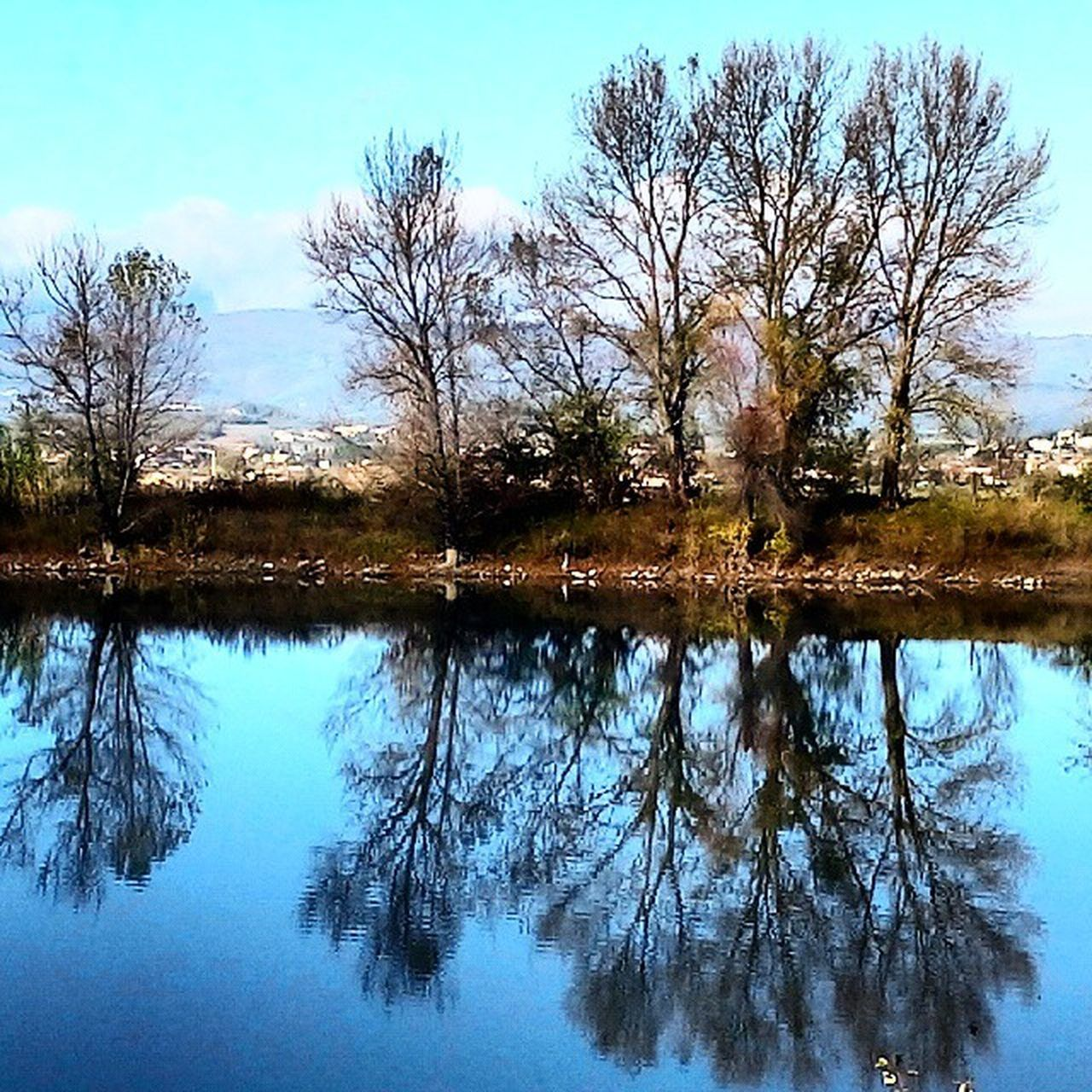 reflection, tree, tranquility, tranquil scene, lake, nature, water, beauty in nature, outdoors, scenics, no people, bare tree, sky, day