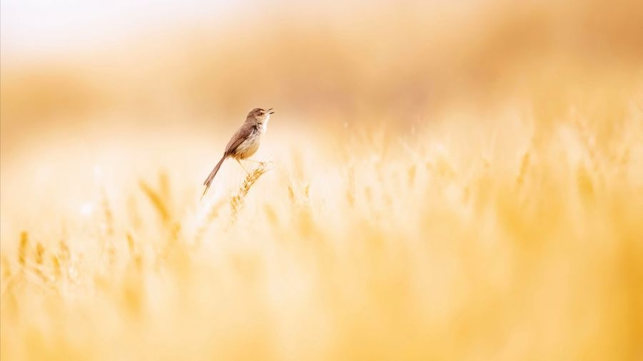 View of a bird on the land