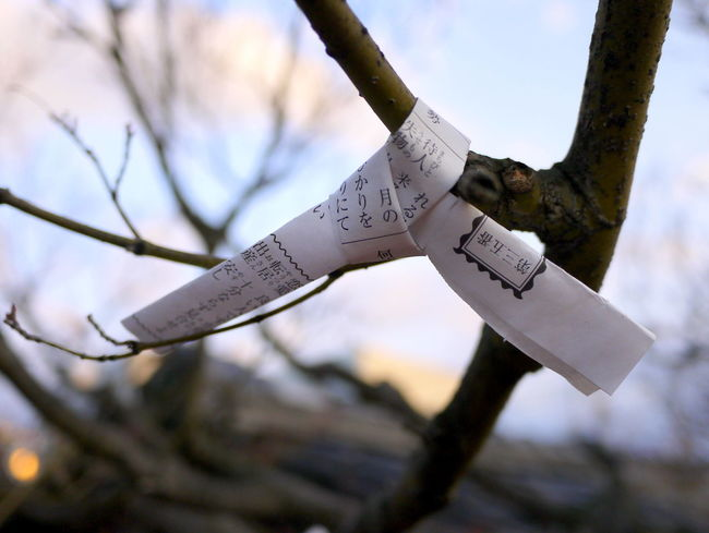 Close-up Focus On Foreground Fortune Telling Japan No People Omikuji Paper Selective Focus Tree