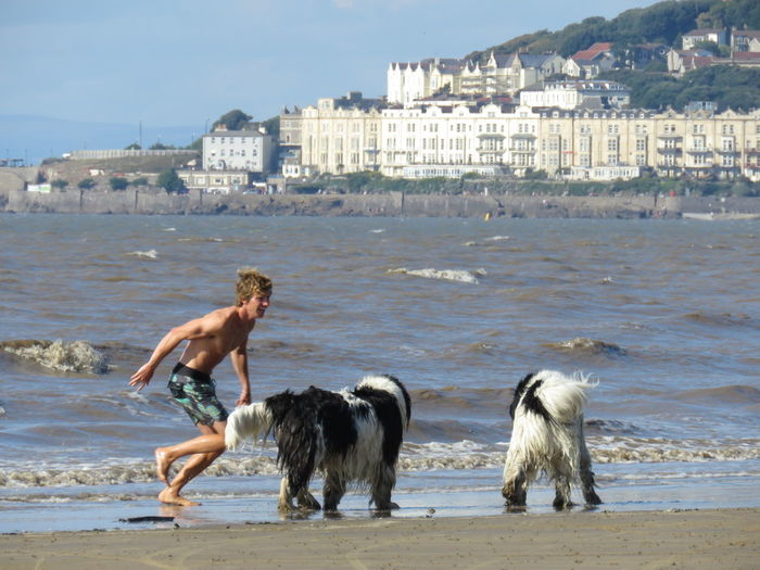 Animal Themes Water Domestic Animals Two Animals Sea Wave Outdoors Waterfront Splashing Taking Photos Weston-super-mare Somerset England Watching And Waiting Camera Ready Beachphotography Summer Shore Blue Sand Beach Togetherness Animal Behavior Ocean Seascape Pets Beautiful Dogs