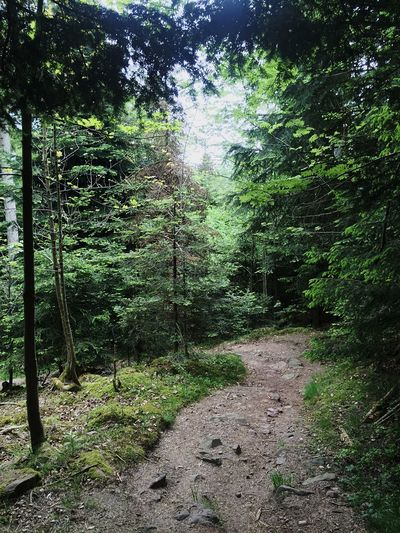Auf dem Weg nach unten🚶 Hello World Waldspaziergang EyeEm Best Shots EyeEm Nature Lover Tadaa Community Black Forest