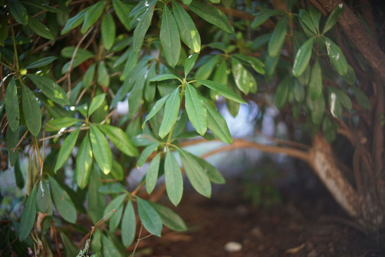 Close-up of wet leaves on tree