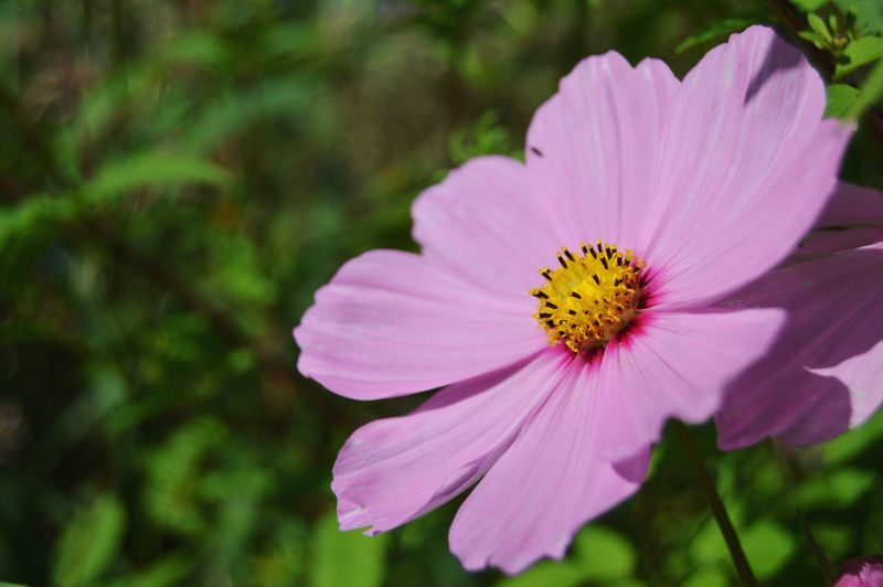 Flowers Flowers, Nature And Beauty Flower Photography Flowers,Plants & Garden Flowerphotography Purple Flower Purple Flowers Beauty In Nature Nature Nature Photography Pink Flower Pink Flowers Flower Head Flower Pink Color Petal Purple Close-up Plant