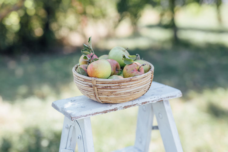 Food Healthy Eating Food And Drink Freshness Wellbeing Basket Fruit Container Apple - Fruit Focus On Foreground Day No People Nature Table Still Life Agriculture Front Or Back Yard Outdoors Field Organic Summer Summertime Harvest Harvesting Harvesting Time