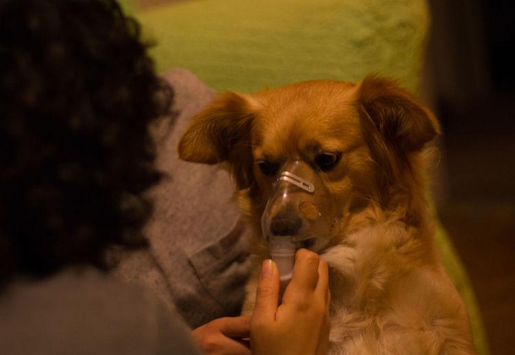 Vet applying oxygen mask to dog