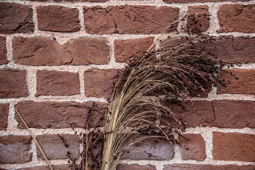 Columbia Sc Riverfront Park Brick Wall Brick Built Structure Wall Wall - Building Feature Architecture No People Day Close-up Outdoors Building Exterior Textured  Pattern Nature Brown Old Plant Full Frame Art And Craft Stone Wall Grass Contrast