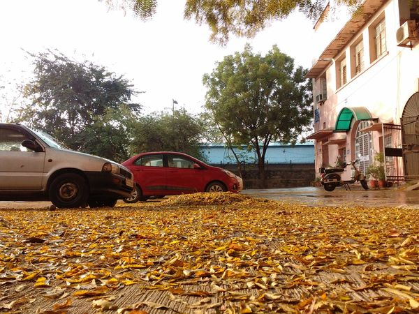 Autumn Leaves Monsoon Delhi, India Delhidiaries Home Morning Light Morning