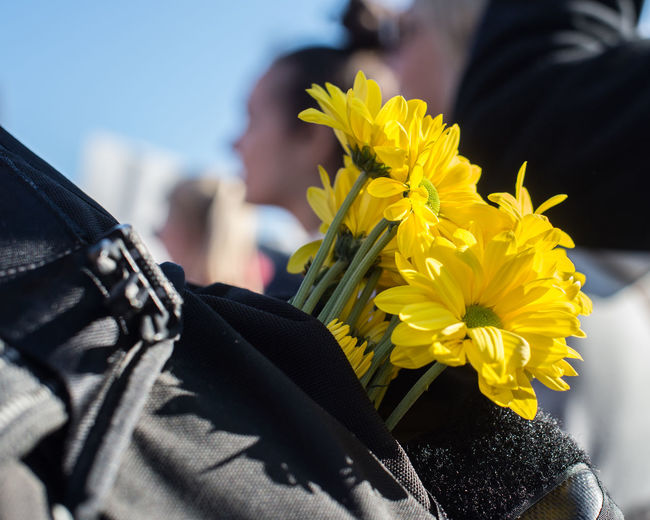 Close-Up Of Person Holding Yellow Flowers