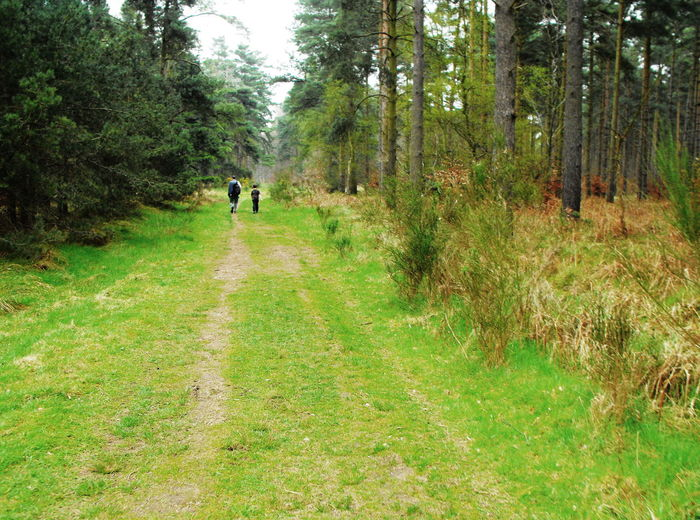 A walk in the woods Day Diminishing Perspective Direction Family Time Father And Son Footpath Forest Full Length Grass Land Landscape Men Nature Non-urban Scene Outdoors Plant Rear View The Way Forward Thetford Thetford Forest Transportation Travel Tree Walking WoodLand