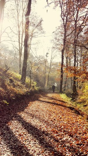 free your mind Forestwalk Walking Alone... Light & Shadow Autumn Colors Leaves On The Ground Silence Of Nature Break From Work EyeEm Nature Lover EyeEm Gallery EyeEm Selects Sunlight Nature Tree No People Shadow Autumn Day Outdoors Beauty In Nature An Eye For Travel