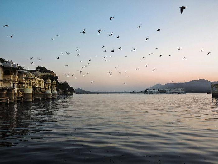 Birds flying over sea against sky