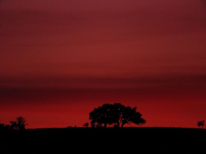 Red sky horizon silhouette Nature No People Landscape Sky Tranquil Scene Beauty In Nature Scenics Sunset Tree Silhouette Cloud - Sky