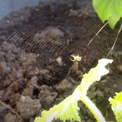 Nature Spider Web Livenature Photography
