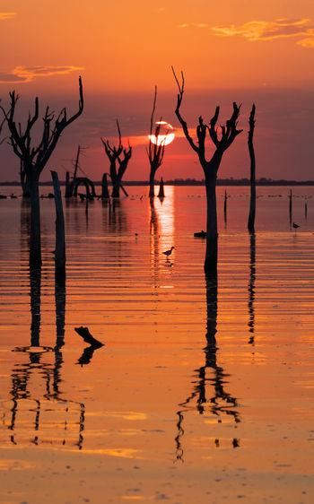 Silhouette birds in lake against orange sky