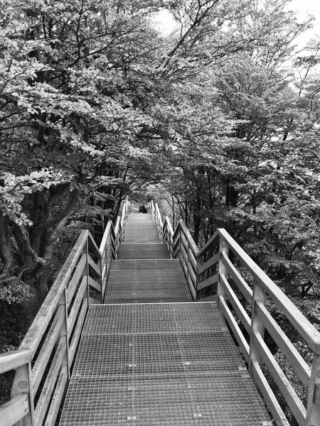 Beauty In Nature Black & White Black And White Black And White Photography Blackandwhite Day Footbridge Growth Nature No People Outdoors Perito Moreno Perito Moreno Glacier Perito Moreno. Patagonia. Argentina. Railing Sky The Way Forward Tranquility Tree