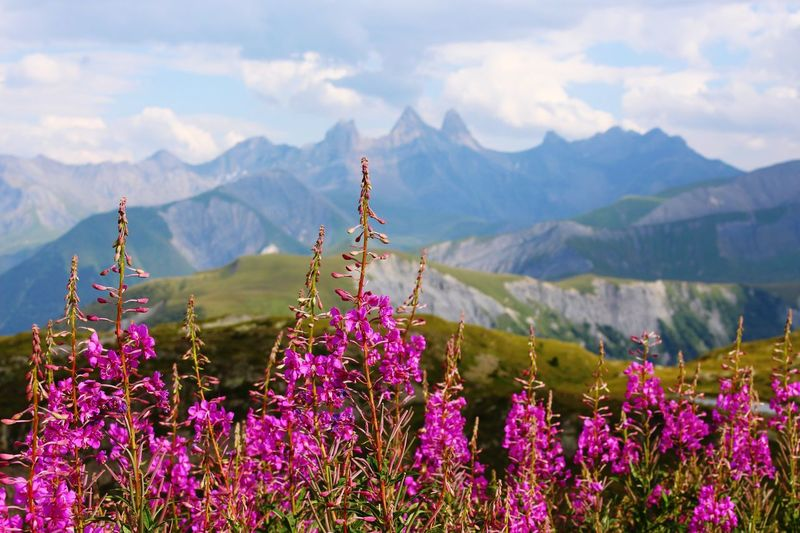Mountain Flower Nature Beauty In Nature Plant No People Saint Sorlin D'Arves Tranquil Scene Les Aiguilles D'arves Beauty In Nature Montains    Landscape Aiguilles D'arves