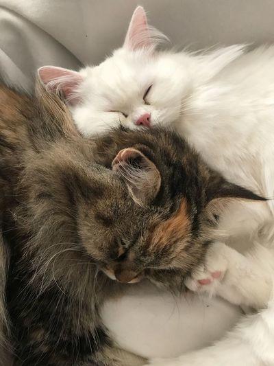 Sweet Warm dreams...