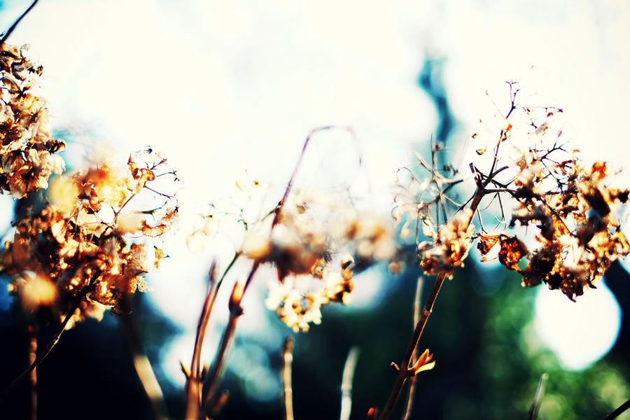 Flower Flowers Hydrangea Hydrangeas Japan Nature No People Plant