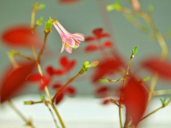 ひっそりと開花EyeEm Nature Lover Boke Kokedama Natural Photo Cute Japan Macro Macro Photography Spring Flowers Spring Flowers Macro_collection Macrophotography Macrolove
