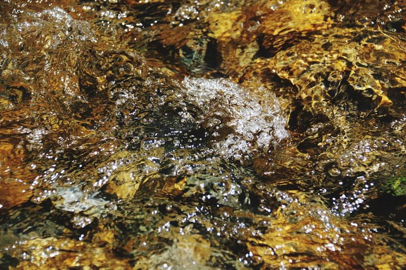 Science camp creek study Water Underwater Nature Close-up Beauty In Nature Outdoors Rocks Under Water Yellow Color reflection