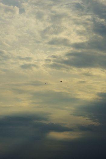 The Moment - 2015 EyeEm Awards ひろい Skyporn 自由に翔ぶ鳥達 Birds いつか共に翔ぶよ Flying High そう Capturing Freedom ずっと EyeEm Best Shots 隣で EyeEm Nature Lover EyeEm Best Edits 天まで届け 自由への証