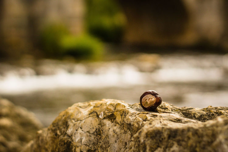 Acorn Animal Themes Close-up Day Focus On Foreground Gastropod Nature No People Nutshell Outdoors