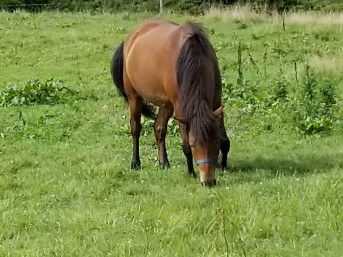 Horse Grass One Animal Domestic Animals Animal Animal Themes Grazing Livestock Field Grass Area Mammal Green Color No People Nature Outdoors Day Beauty In Nature Oil Pump Pet Portraits