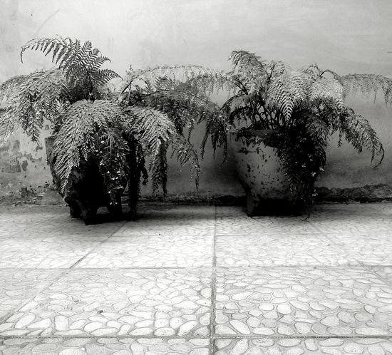 Blackandwhite Flowers Monochrome Nature Garden Blancoynegro Blackandwhitephotography