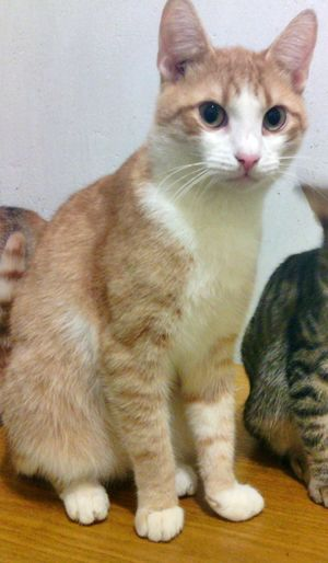 Чук Cat Pets Animal Meow Cats Of EyeEm Domestic Animals First Eyeem Photo