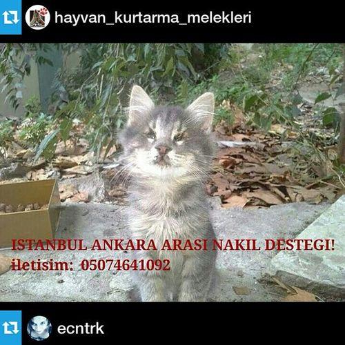 Repost from @hayvan_kurtarma_melekleri with @repostapp — Repost from @ecntrk with @repostapp --- Bu gecenin guzel haberi 4 kor kardesten biri yuvalandi:) Yavrumuzun yeni yuvasina kavusmasi icin Acil Istanbul Ankara arası Nakil destegine ihtiyac var ! Cat Körkedi Yuva Kedi Catstagram Catsofistanbul Resque Instacat Instakitty Petlove  Catlovers Catsofinstagram Pati Love Kitty Kitten Katze Transfer Yardım !!!!