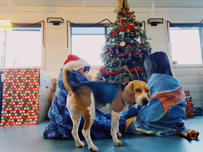 View of dogs on christmas tree at home