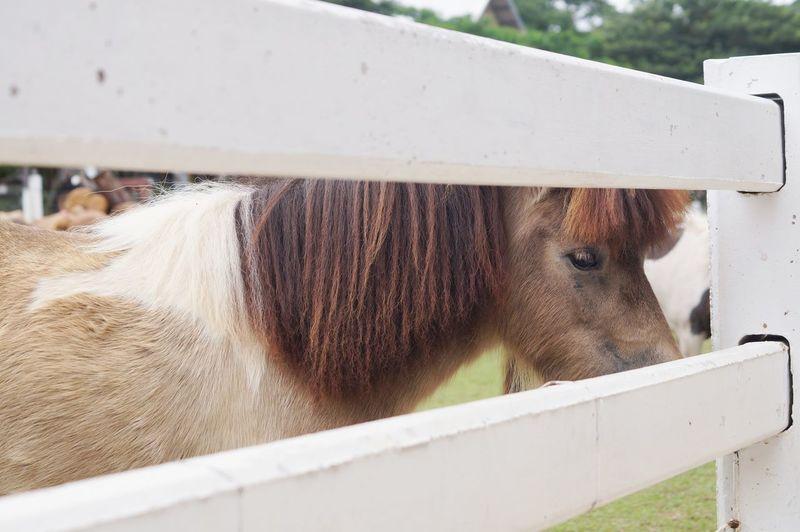 Horse Outdoor