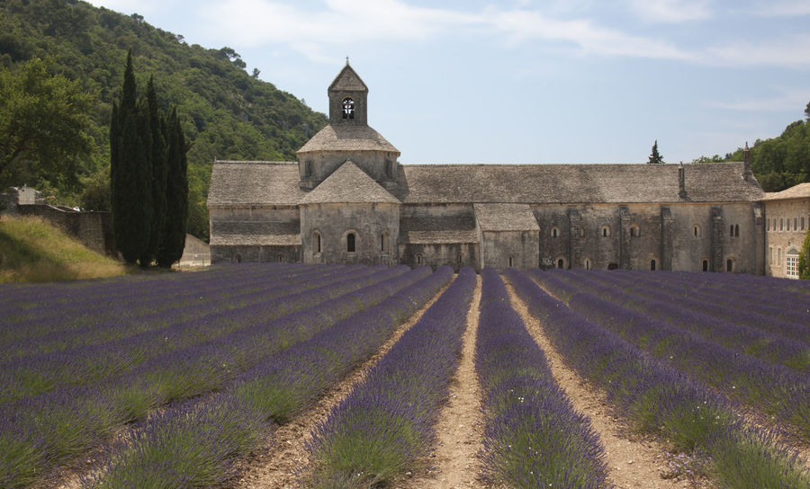 Senanque Abbey with Lavender Agriculture Architecture Building Exterior Built Structure Church Cloud - Sky Europe Façade Flowers Footpath France History Landscape Lavander Outdoors Place Of Worship Provence Religion Rural Scene Senanque Sky Sun Tourism Travel Destinations Valensole