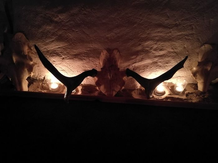 Skulls Lights And Shadows Motherpinetree Hilaria Shamanart