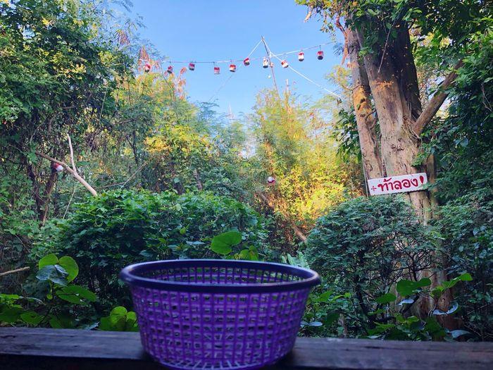 Plant Nature Outdoors Park