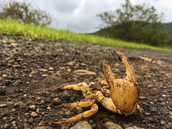 Close-up of crab on field