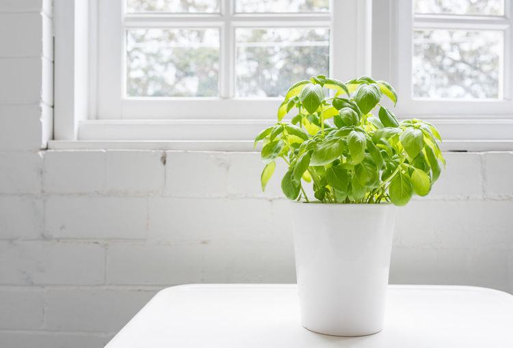 Potted plant on window sill