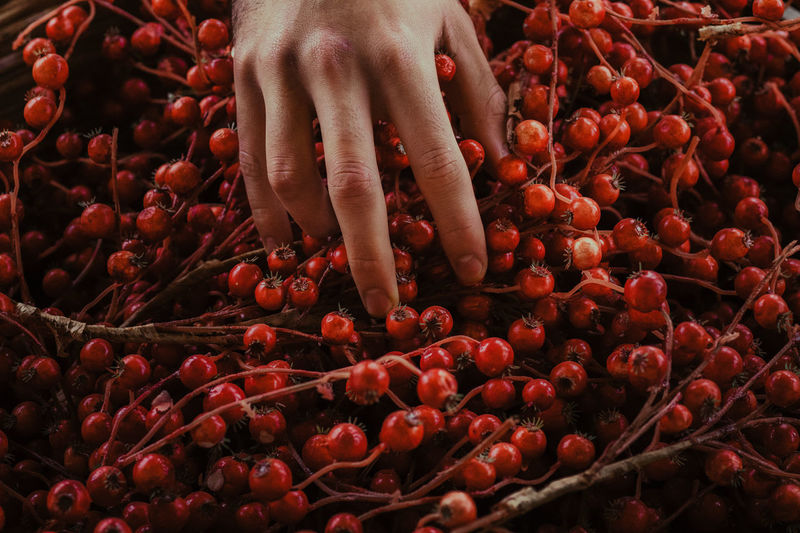 Red EyeEm Of The Week The Week On EyeEm Close-up Freshness Fruit Human Hand Indoors  Lifestyles Real People Red Food Stories Business Stories