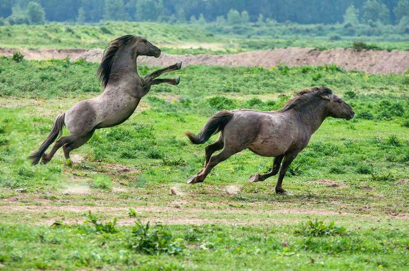Horses running on grassy field